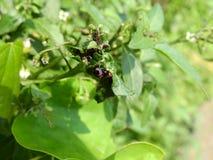 Πράσινο grasshopper φύλλων στοκ φωτογραφίες
