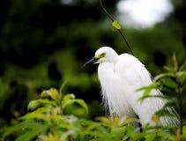 Πράσινο hornett Στοκ φωτογραφίες με δικαίωμα ελεύθερης χρήσης