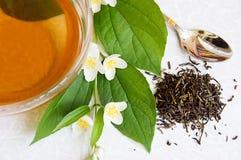 πράσινο jasmine τσάι Στοκ εικόνες με δικαίωμα ελεύθερης χρήσης