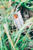 πράσινο ladybug χλόης Στοκ φωτογραφία με δικαίωμα ελεύθερης χρήσης