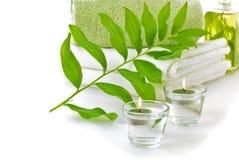 πράσινο leaf spa στοκ εικόνες