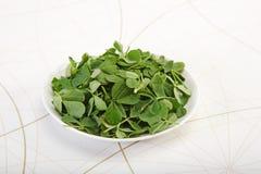 Πράσινο Methi ή Fenugreek με το κονίαμα και το γουδοχέρι Στοκ φωτογραφία με δικαίωμα ελεύθερης χρήσης