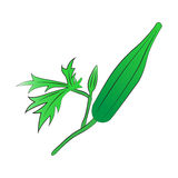 Πράσινο Okra Στοκ φωτογραφία με δικαίωμα ελεύθερης χρήσης