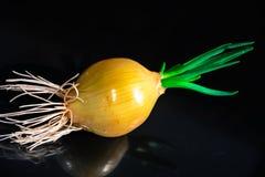Πράσινο onions Στοκ Φωτογραφία