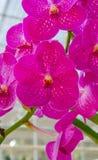 πράσινο orchid ανασκόπησης Στοκ φωτογραφία με δικαίωμα ελεύθερης χρήσης