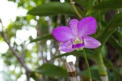 πράσινο orchid ανασκόπησης Στοκ Φωτογραφίες