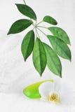 πράσινο orchid σαπούνι Στοκ Εικόνα