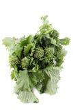 πράσινο rapini στοκ εικόνα