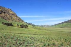 Πράσινο Savana με το μπλε ουρανό στοκ εικόνα
