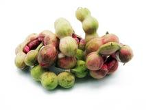 Πράσινο tamarind της Μανίλα στοκ φωτογραφία με δικαίωμα ελεύθερης χρήσης