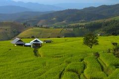 Πράσινο Terraced πεδίο ρυζιού σε Chiangmai, Ταϊλάνδη Στοκ Φωτογραφία