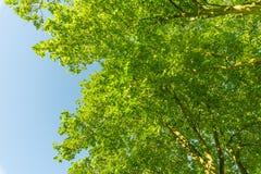 πράσινο treetop Στοκ Φωτογραφίες
