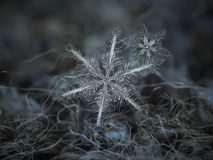Πραγματικά snowflakes που καίγονται στο σκοτεινό κατασκευασμένο υπόβαθρο Στοκ Εικόνες
