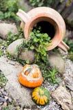 Πραγματικές κολοκύθα μωρών και διακόσμηση αγγειοπλαστικής κήπων Στοκ Εικόνες