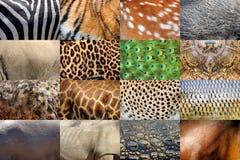 Πραγματικό δέρμα ζώων Στοκ Φωτογραφίες