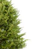 πραγματικό δέντρο Χριστο&upsilo Στοκ φωτογραφία με δικαίωμα ελεύθερης χρήσης