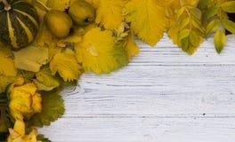πραγματικό λευκό φύλλων φθινοπώρου όμορφο απομονωμένο πλαίσιο Στοκ φωτογραφία με δικαίωμα ελεύθερης χρήσης