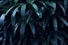 Πραγματικό τροπικό υπόβαθρο φύλλων, φύλλωμα ζουγκλών στοκ εικόνες