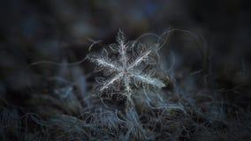Πραγματικό snowflake που καίγεται στο σκοτεινό κατασκευασμένο υπόβαθρο Στοκ εικόνα με δικαίωμα ελεύθερης χρήσης