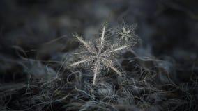 Πραγματικό snowflake που καίγεται στο σκοτεινό κατασκευασμένο υπόβαθρο Στοκ Εικόνα