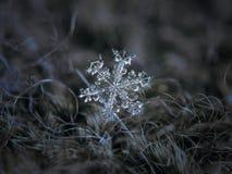 Πραγματικό snowflake που καίγεται στο σκοτεινό κατασκευασμένο υπόβαθρο Στοκ φωτογραφία με δικαίωμα ελεύθερης χρήσης