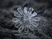 Πραγματικό snowflake που καίγεται στο σκοτεινό κατασκευασμένο υπόβαθρο Στοκ Φωτογραφίες