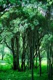 Πρασινάδα στο βοτανικό κήπο Στοκ εικόνα με δικαίωμα ελεύθερης χρήσης