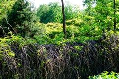 Πρασινάδα στο εγκαταλειμμένο πάρκο Στοκ Εικόνες
