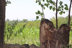 Πρασινάδα στο τμήμα Haripur Hazara, βόρεια περιοχή του Πακιστάν στοκ εικόνα