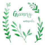 Πρασινάδα Watercolor που τίθεται με τα φύλλα, τα χορτάρια και τους κλάδους που απομονώνονται στο άσπρο υπόβαθρο Βοτανική απεικόνι στοκ εικόνες