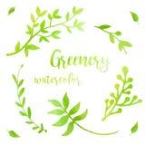 Πρασινάδα Watercolor που τίθεται με τα φύλλα, τα χορτάρια και τους κλάδους που απομονώνονται στο άσπρο υπόβαθρο Βοτανική απεικόνι στοκ εικόνα με δικαίωμα ελεύθερης χρήσης