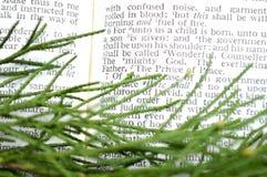 Πρασινάδα με το scripture Χριστουγέννων, Isaiah 9:6 Στοκ Εικόνες