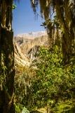 Πρασινάδα στο Περού Στοκ φωτογραφία με δικαίωμα ελεύθερης χρήσης