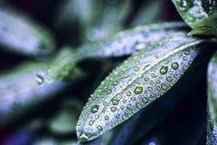 πρασινάδα στοκ εικόνες