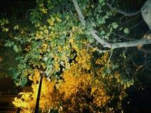 Πρασινωπή άποψη του δέντρου Στοκ φωτογραφία με δικαίωμα ελεύθερης χρήσης