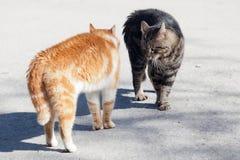 Πριν από την πάλη της κόκκινης και γκρίζας γάτας στοκ φωτογραφίες