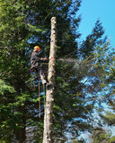 Πριονίζοντας δέντρο δενδροκόμων στοκ εικόνες