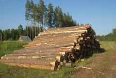 πριονισμένα δέντρα Στοκ Φωτογραφία