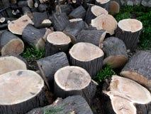 πριονισμένο δάσος Στοκ Εικόνες
