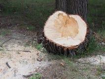 πριονισμένο δάσος Στοκ εικόνες με δικαίωμα ελεύθερης χρήσης
