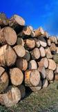 Πριονισμένο επάνω δέντρο Στοκ εικόνες με δικαίωμα ελεύθερης χρήσης
