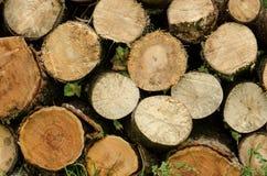 Πριονισμένο ξύλο που συσσωρεύεται Στοκ εικόνες με δικαίωμα ελεύθερης χρήσης