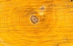 Πριονισμένο πυρήνας ξύλο της κινηματογράφησης σε πρώτο πλάνο σημύδων Στοκ Φωτογραφία