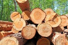 πριονισμένο δέντρο επάνω Στοκ Εικόνες