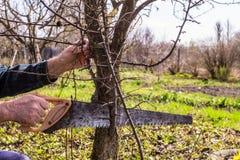 Πριόνια κηπουρών από τους πρόσθετους κλάδους των δέντρων στοκ φωτογραφίες