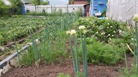 Προαστιακή περιοχή χώρας με την ανάπτυξη των λαχανικών Στοκ εικόνα με δικαίωμα ελεύθερης χρήσης