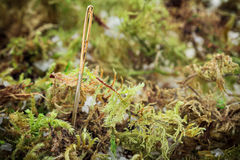 προβλήματα βελόνων θυμωνιών χόρτου επιτεύγματος Στοκ φωτογραφία με δικαίωμα ελεύθερης χρήσης
