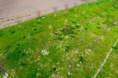 Προγραμματισμένος οπωρώνας κερασιών Νέα δέντρα του γλυκού κερασιού Χορτοτάπητας στον κήπο στοκ φωτογραφίες με δικαίωμα ελεύθερης χρήσης