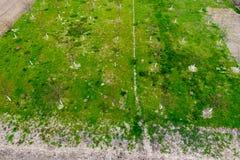 Προγραμματισμένος οπωρώνας κερασιών Νέα δέντρα του γλυκού κερασιού Χορτοτάπητας στον κήπο του γλυκού στοκ εικόνα