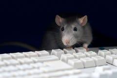 προγραμματιστής Στοκ εικόνα με δικαίωμα ελεύθερης χρήσης